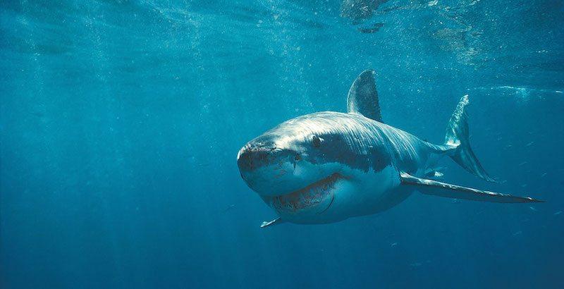 tour-great-white-shark-safari-cape