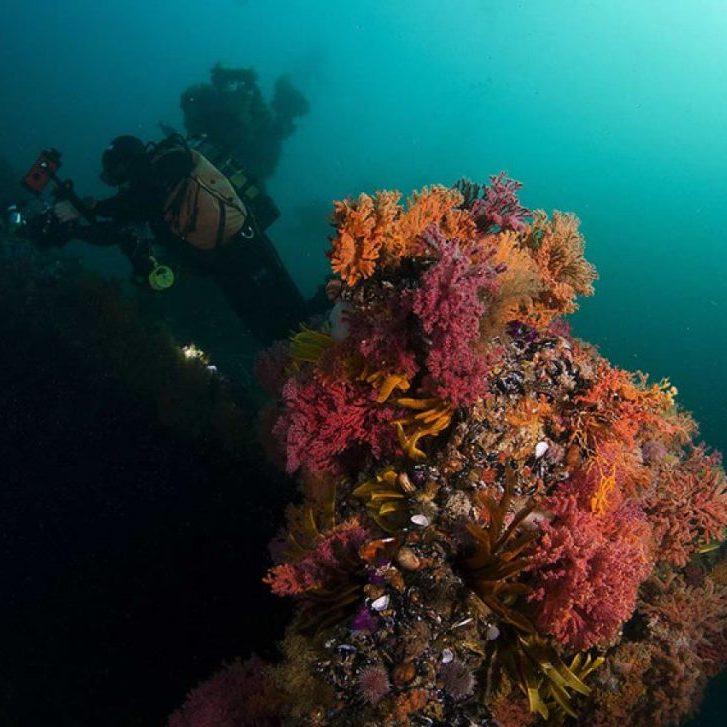 ScaleWidthWyIxMjAwIl0-shipwrecks-diving-capetown-010