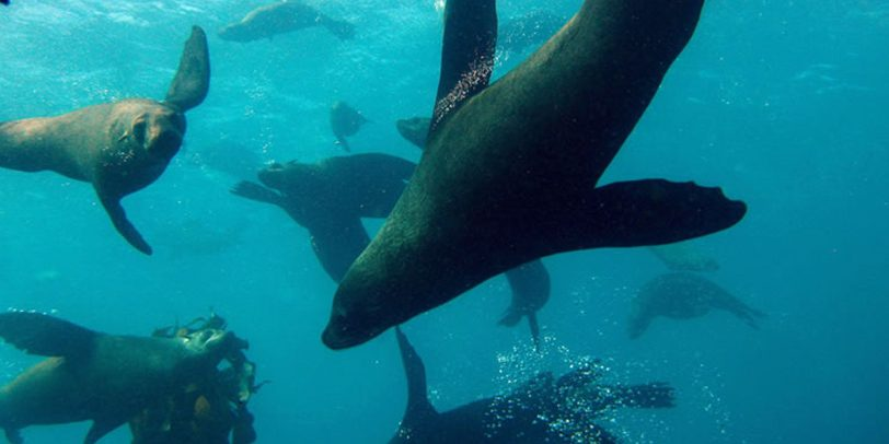 scuba-dive-with-seals-partridge-point(1)