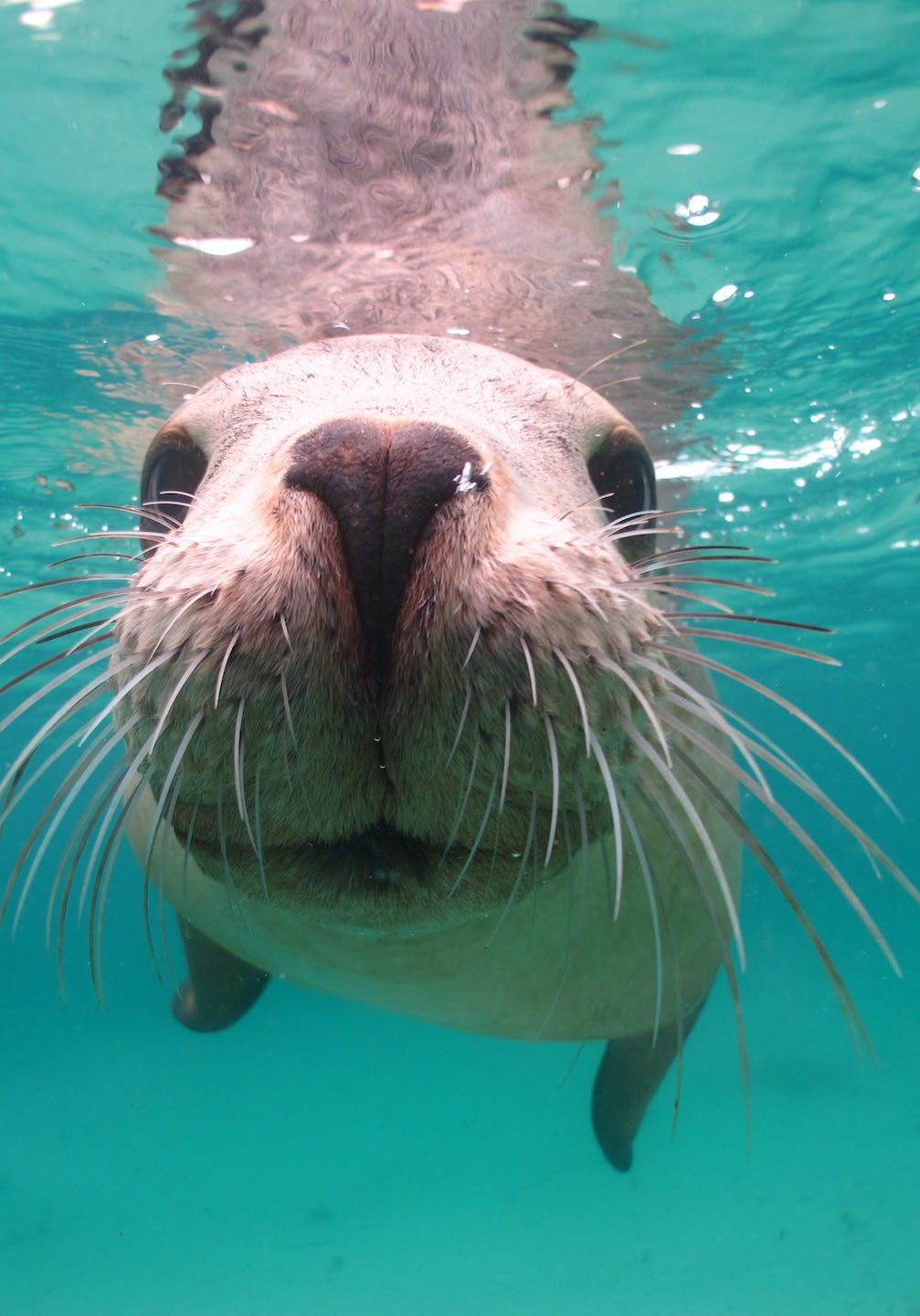 sea-lion-underwater-7134
